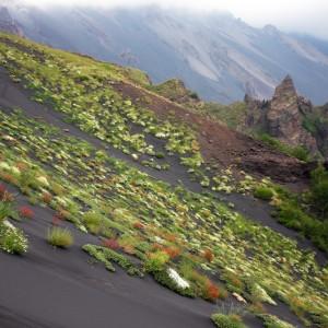 Etna luglio 2005