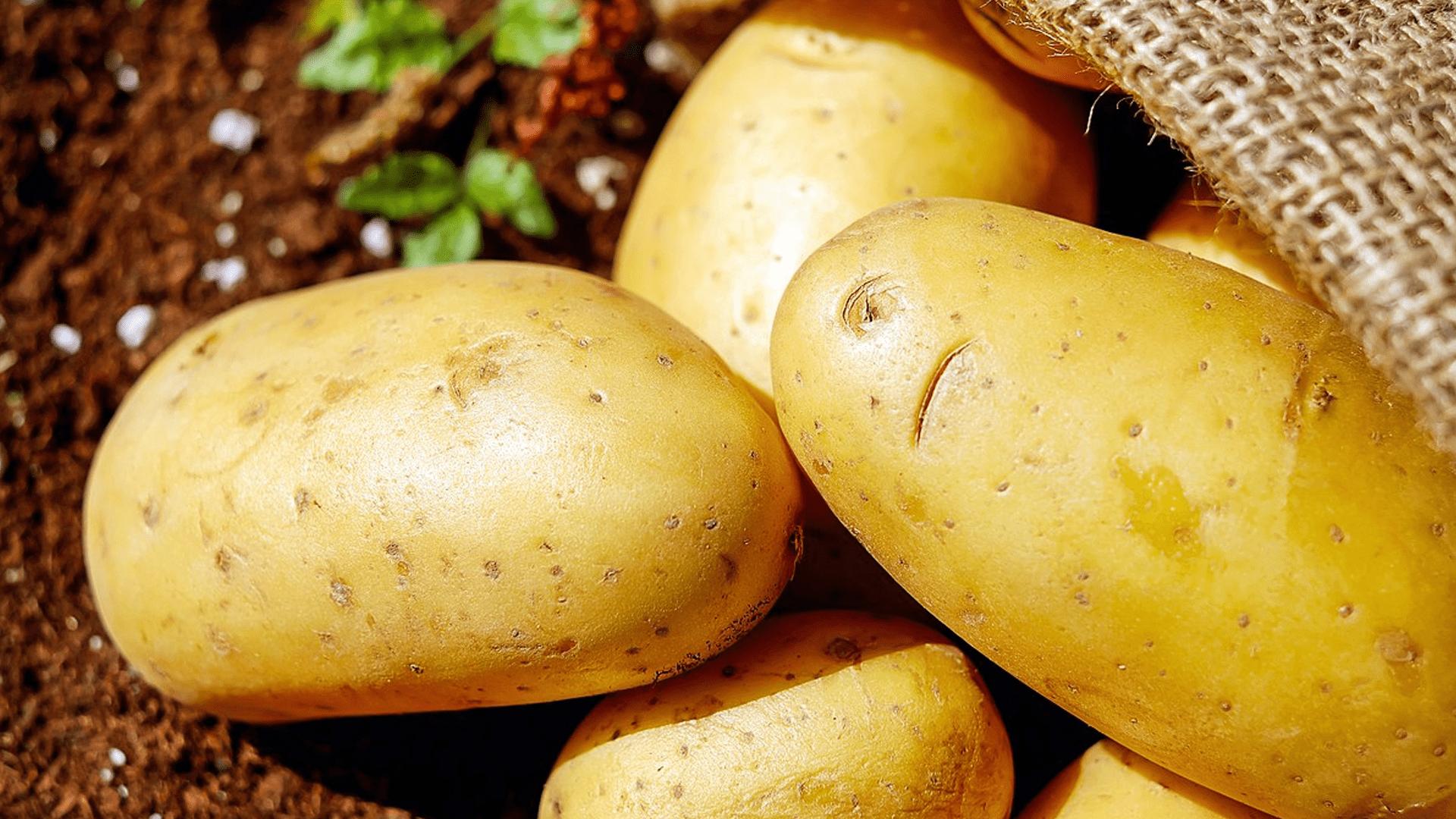 Le patate: dalle Ande alle tavole di tutto il mondo